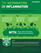 Information on Inflammation Infographic